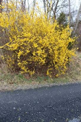 6565 Faughts Rd, Mount Crawford, VA - USA (photo 5)