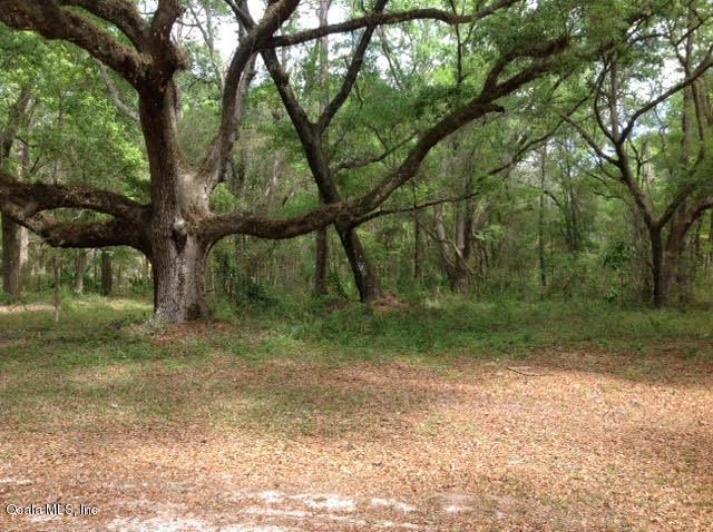Single Family Acreage - Ocala, FL (photo 4)
