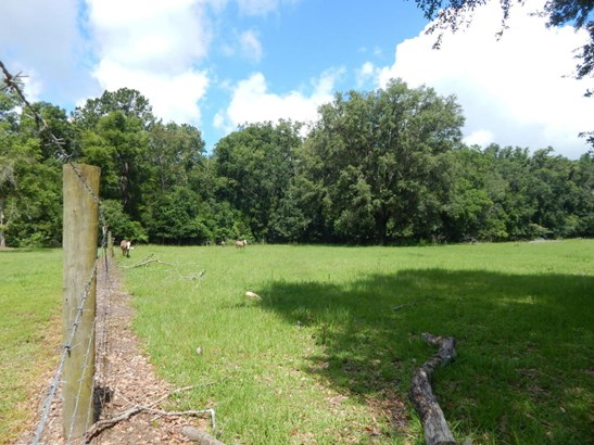 Vacant Land - Williston, FL (photo 3)