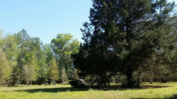 Vacant Land - Citra, FL (photo 3)
