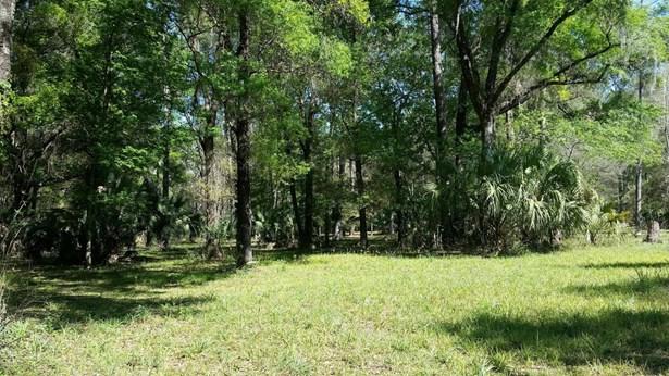Vacant Land - Citra, FL (photo 4)