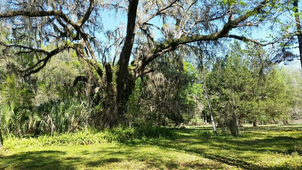 Vacant Land - Citra, FL (photo 5)