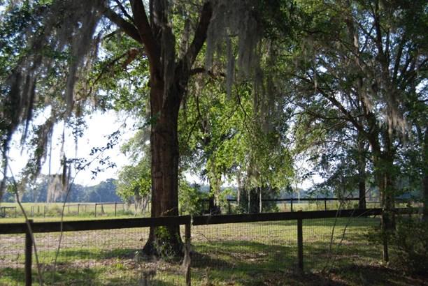 Single Family Acreage - Citra, FL (photo 4)
