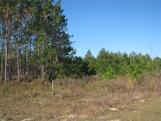 Tree Farm - OCKLAWAHA, FL (photo 3)