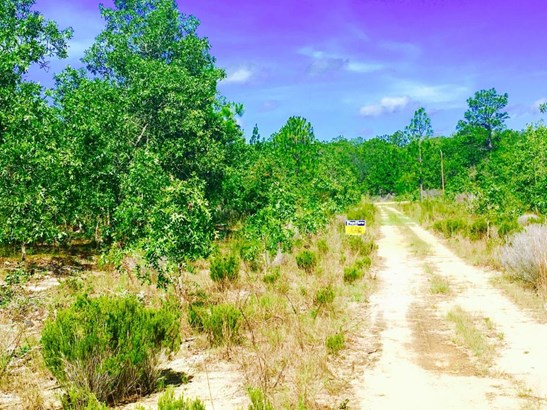 Vacant Land - Interlachen, FL (photo 1)