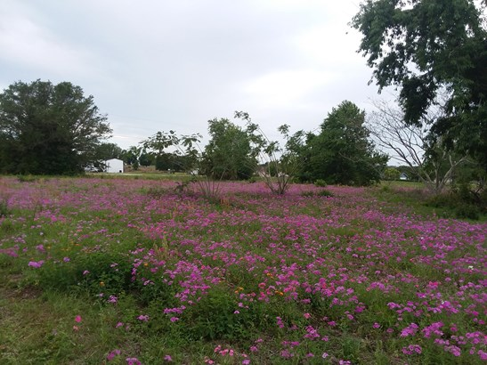 Vacant Land - Weirsdale, FL (photo 4)