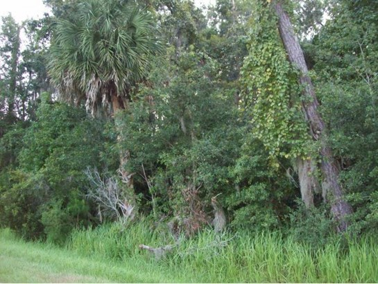 Vacant Land - Micanopy, FL (photo 3)