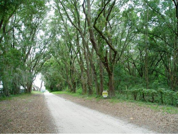 Vacant Land - Ocala, FL (photo 2)