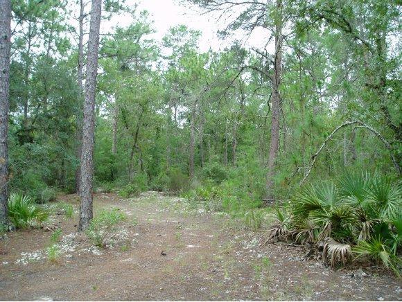 Vacant Land - Ocala, FL (photo 5)