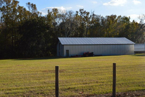 Farm - Reddick, FL (photo 3)