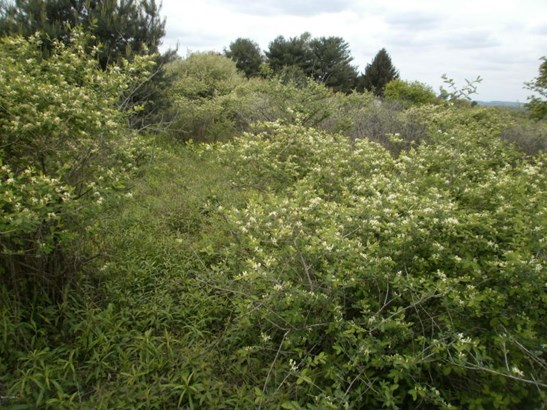 Actual Lot - Shrubs and Small Trees. Needs clearing to build. (photo 3)