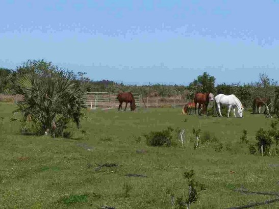Agricultural, All Property - Fellsmere, FL (photo 2)