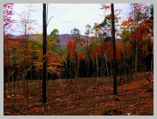 Land - Thornton, NH (photo 4)