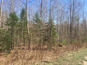 Land - Thornton, NH (photo 1)