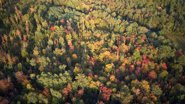 Land - Sugar Hill, NH (photo 4)