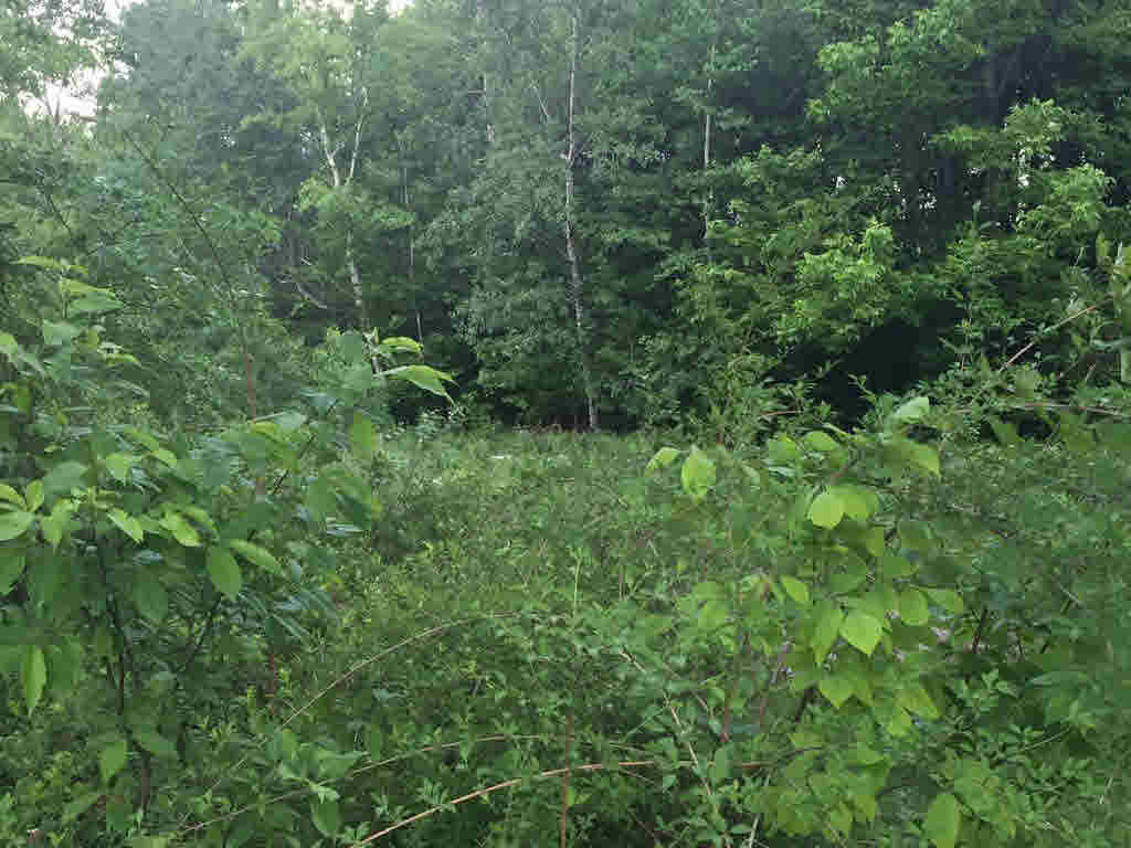 Land - Groton, NH (photo 2)