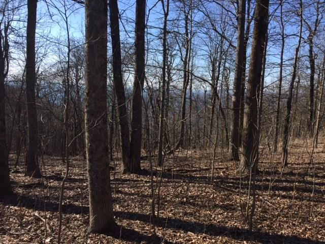Land Lot - Jasper, GA (photo 4)