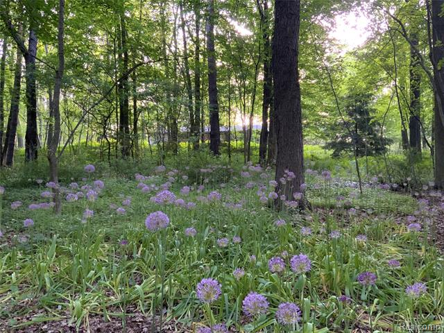 Vacant Land - Bloomfield Hills, MI