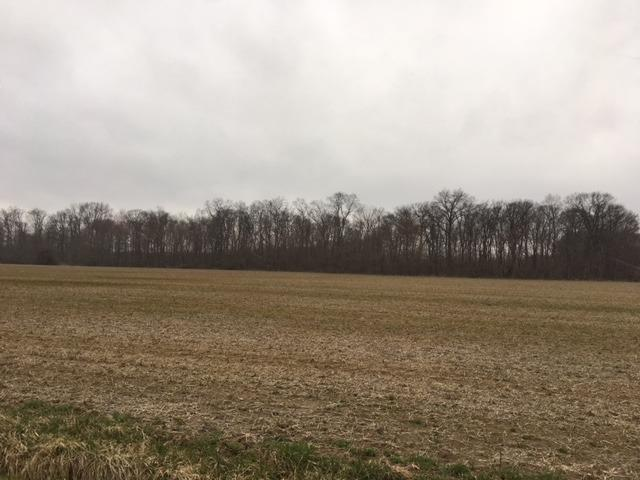 Acreage - Harlan Twp, OH (photo 5)