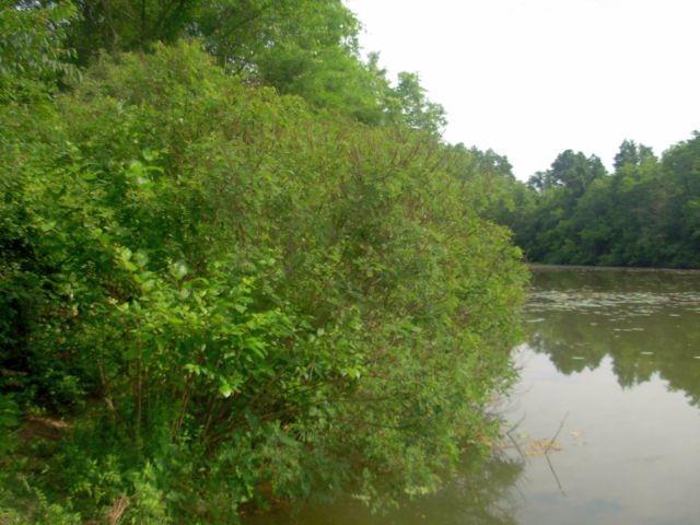 Acreage - New Richmond, OH (photo 4)