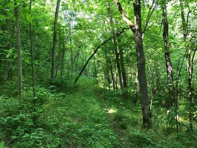 Acreage - Huntington Twp, OH (photo 4)