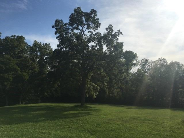Single Family Lot - Anderson Twp, OH (photo 3)