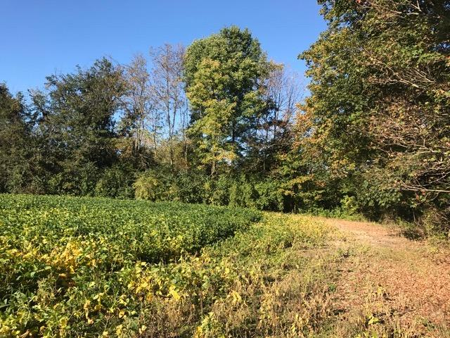 Acreage - Harlan Twp, OH (photo 2)