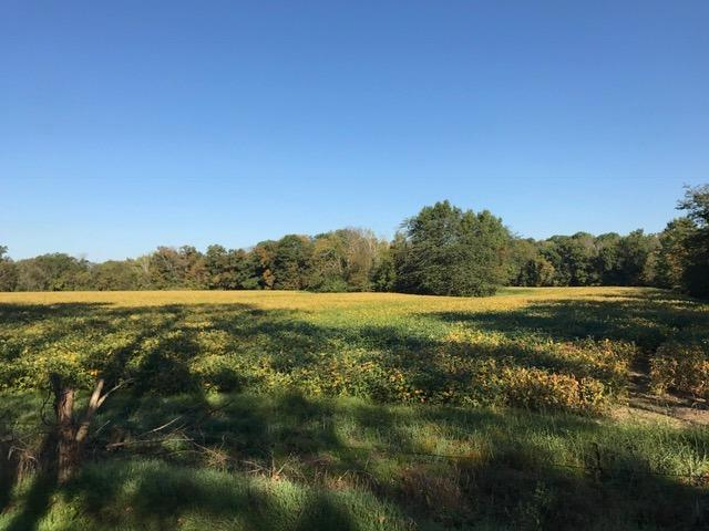 Acreage - Harlan Twp, OH (photo 3)