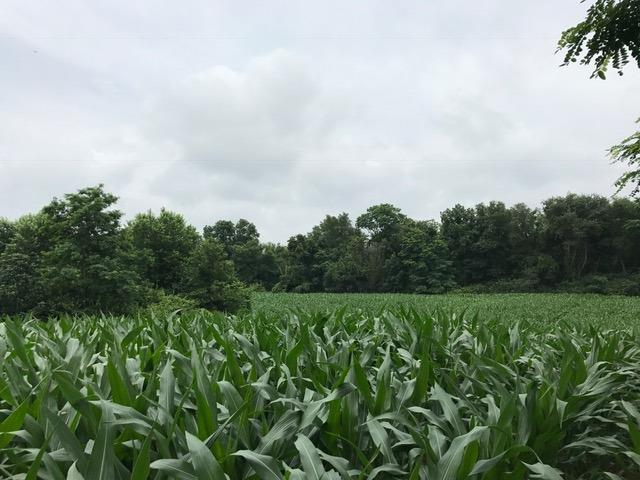 Acreage - Milford Twp, OH (photo 2)