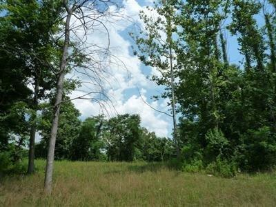 Single Family Lot - Pierce Twp, OH (photo 2)