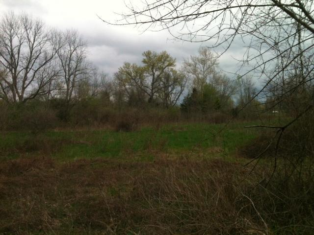 Single Family Lot - Tate Twp, OH (photo 3)