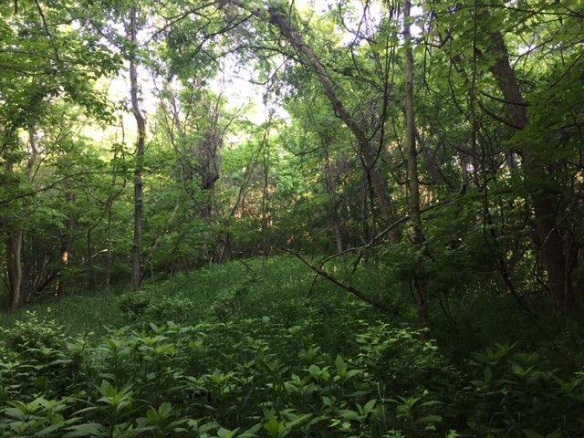 Acreage - Washington Twp, OH (photo 3)