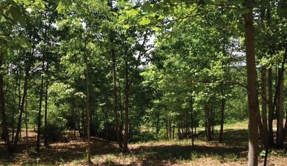 Residential Lot - Travelers Rest, SC (photo 3)