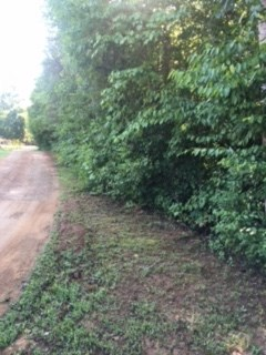 Acreage/Farm - Westminster, SC (photo 2)