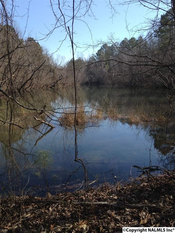 65 Acres County Road 364, PISGAH, AL - Photo 2 (photo 2)