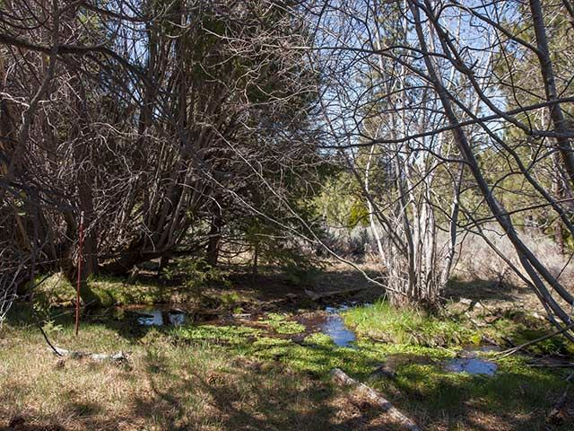 Acreage - Sierraville, CA (photo 1)