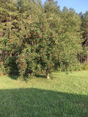1040 Pine Ridge Drive, Hamptonville, NC - USA (photo 2)