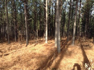 163 Whispering Pines Ln, Mooresboro, NC - USA (photo 2)