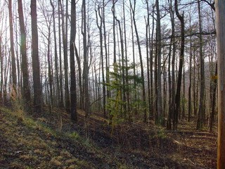 Lot 10 Fire Tower Road, Bostic, NC - USA (photo 3)