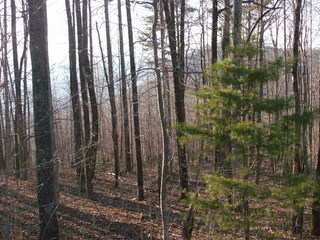 Lot 10 Fire Tower Road, Bostic, NC - USA (photo 4)