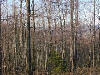 Lot 10 Fire Tower Road, Bostic, NC - USA (photo 5)