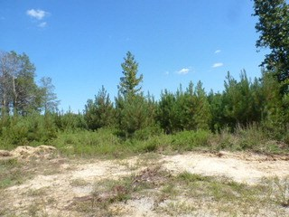 0 Cannery Road, Lancaster, SC - USA (photo 5)