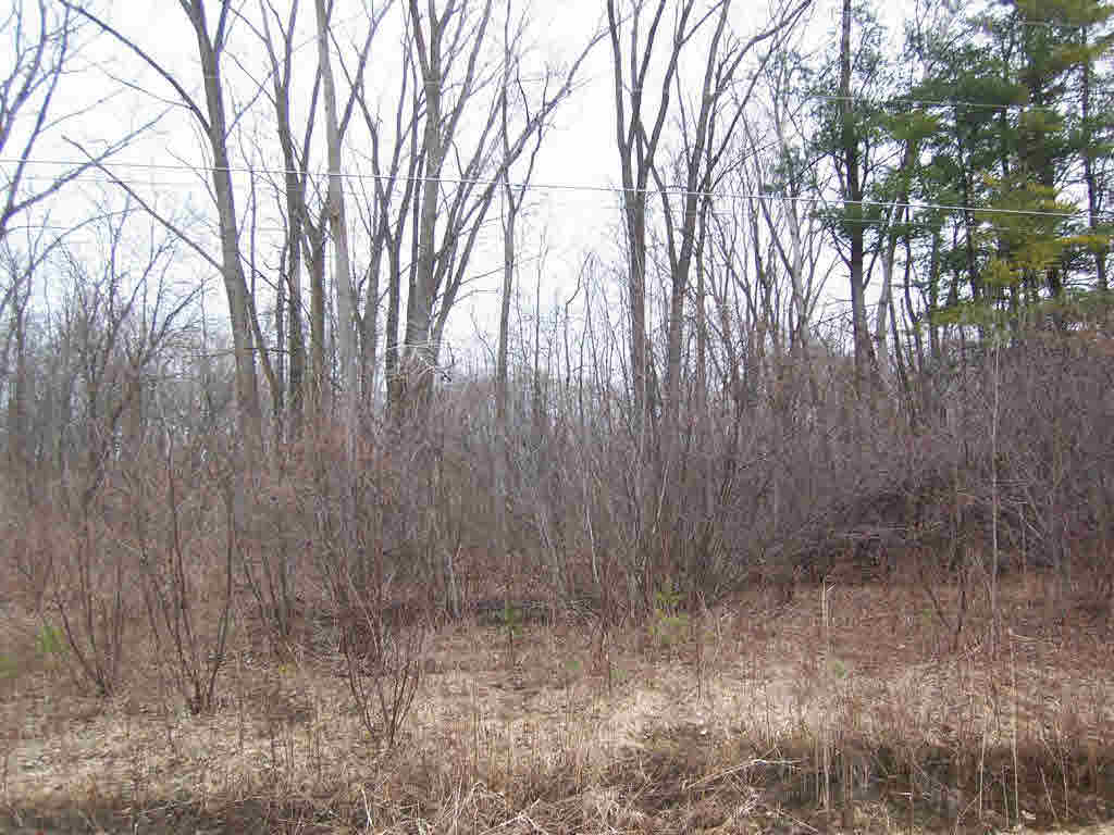 Vacant Land - SUAMICO, WI (photo 1)
