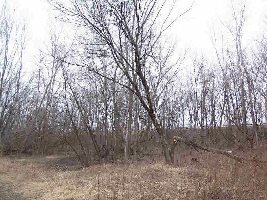 Vacant Land - SUAMICO, WI (photo 2)