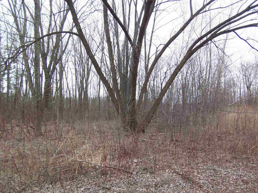 Vacant Land - SUAMICO, WI (photo 3)
