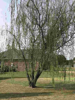 Contemporary,Ranch, Detached - Clinton, MS (photo 4)