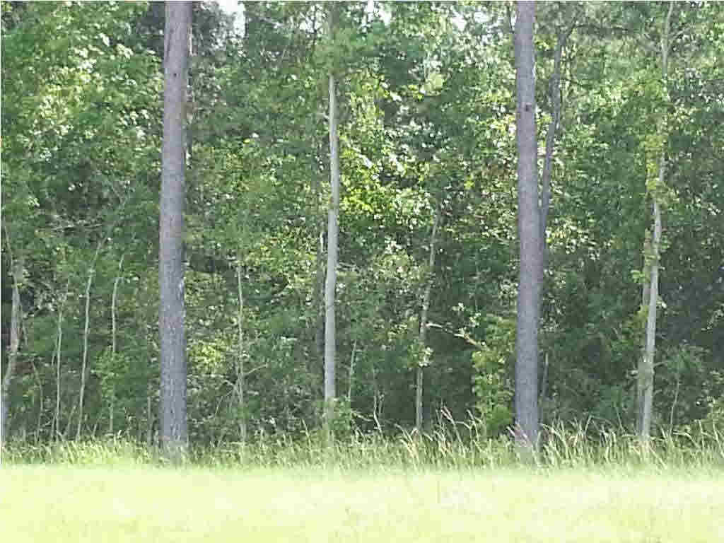 Commercial Land - Pearl, MS (photo 1)