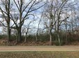 Commercial Land - Flora, MS (photo 1)