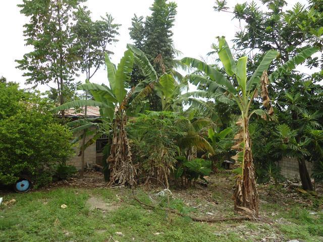 Lot 1 Coconut Grove - Ocho Rios Bypass Road, Ocho Rios - JAM (photo 2)