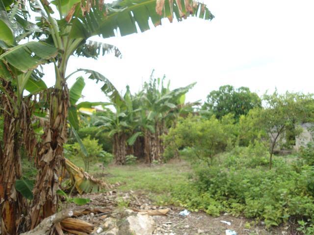 Lot 1 Coconut Grove - Ocho Rios Bypass Road, Ocho Rios - JAM (photo 3)